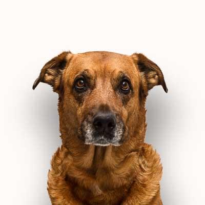 Bürohund Nala